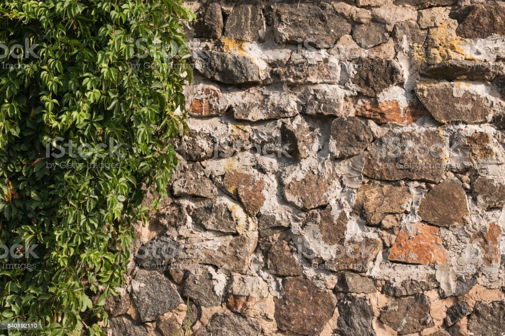Old wall made of cobblestone and grapes lit by the morning sun. stock photo
