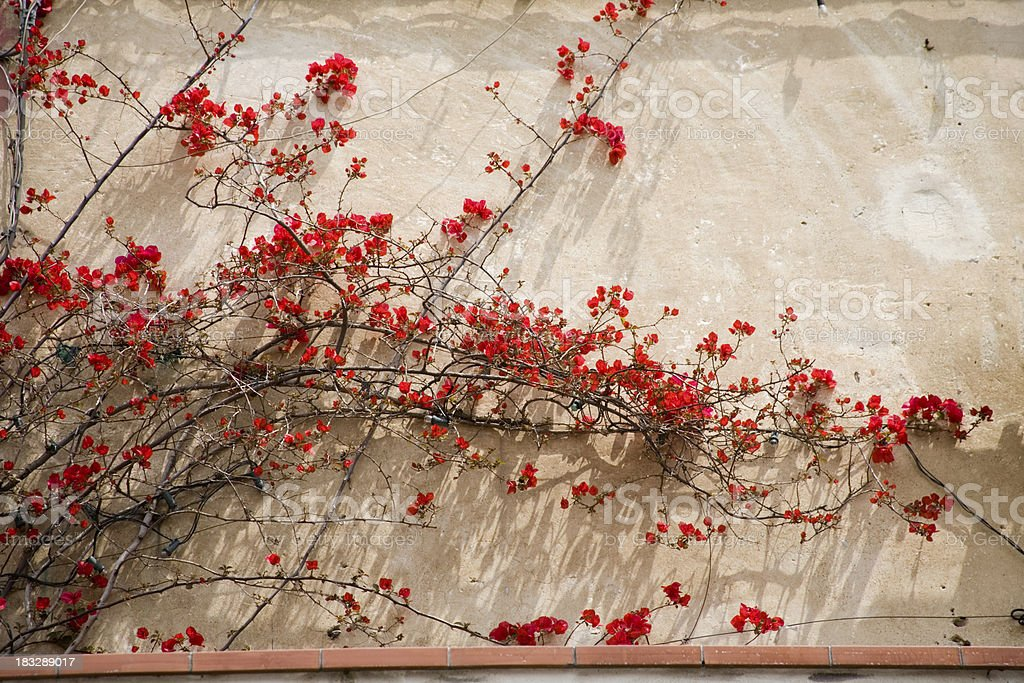 Old wall - new flowers stock photo