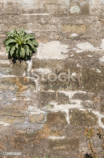 Old wall of natural stone with efflorescence and growth, grouted and plastered and repaired with brick