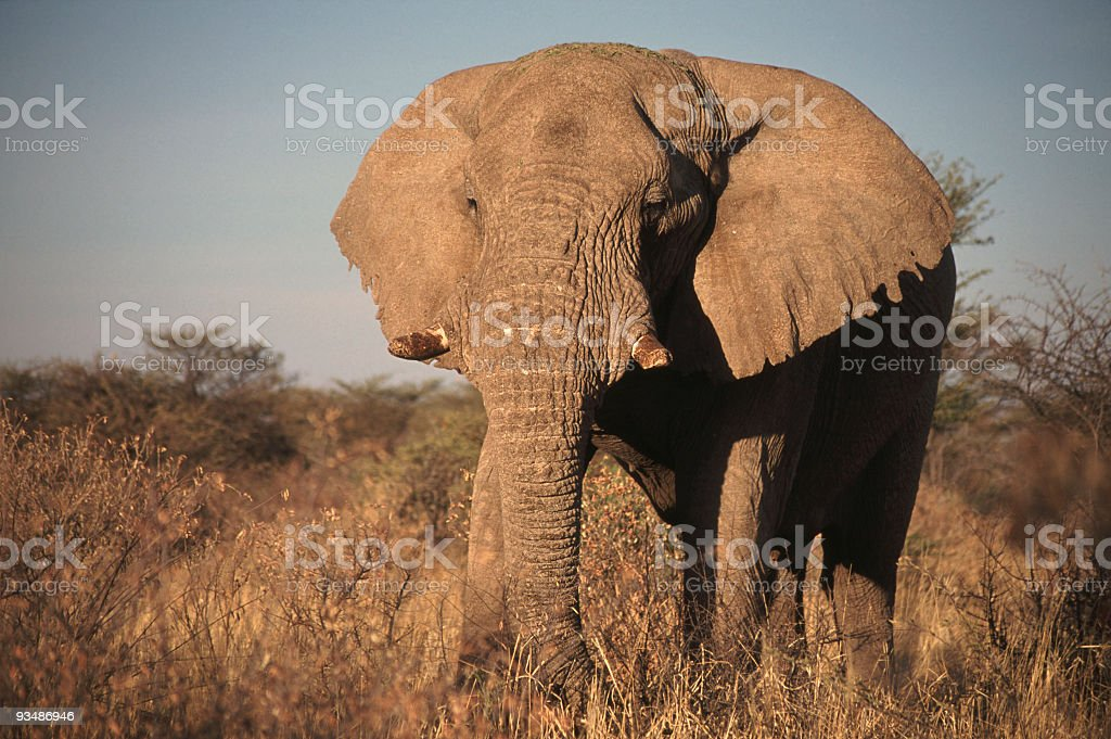 Old Warrior royalty-free stock photo