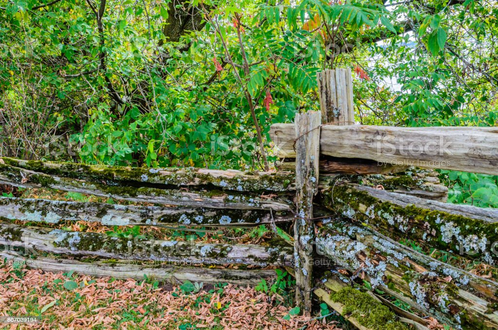 Picture of: Old Weathered Cedar Fence Rails And Posts With Moss And Lichen In Autumn With Woods In The Background Stock Photo Download Image Now Istock