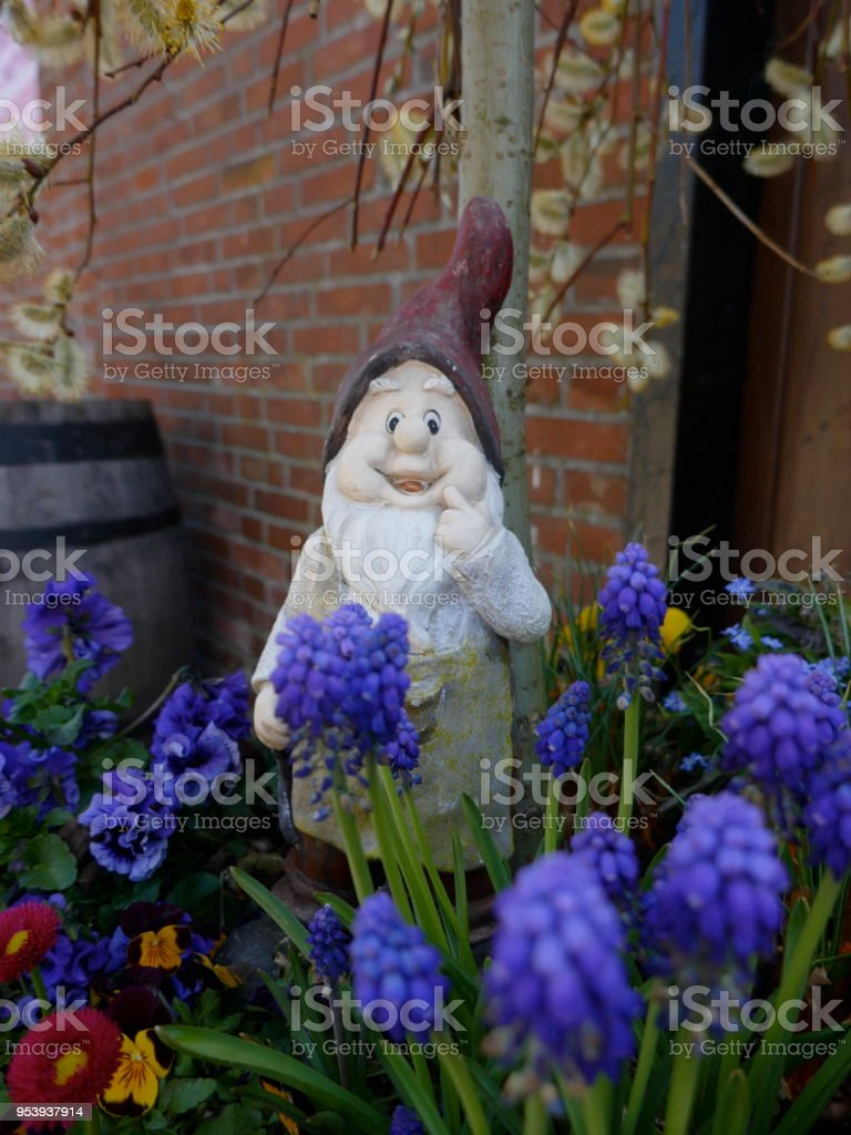 Old Weathered Garden Gnome Stands In A Flowerbed In Front Of A Brown Wooden  Wall Royalty