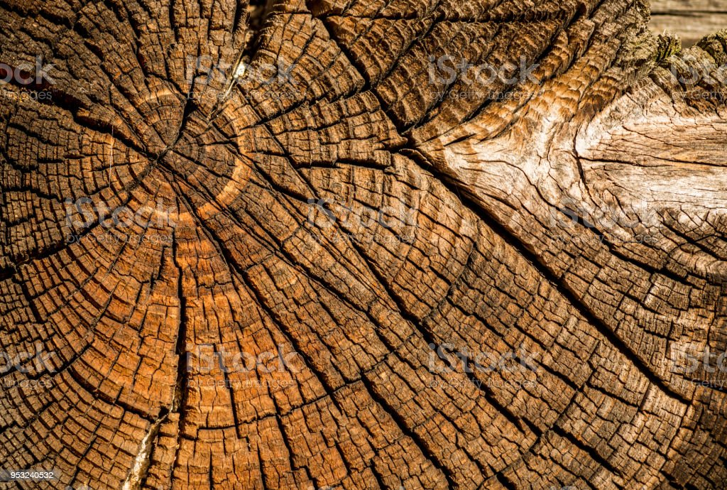 Alte verwitterte Fichte Baum Kofferraum – Foto
