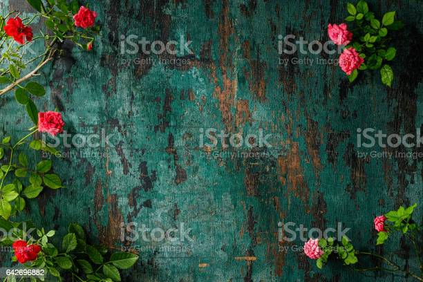 Old weathered wood turquoise background with red and pink roses it picture id642696882?b=1&k=6&m=642696882&s=612x612&h=jndzn65kianmmjsiux2wg ygejztfx4 d7a7xhrwiim=