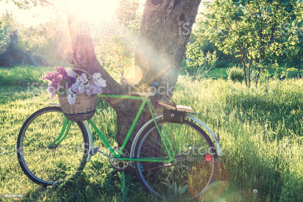 Old Wicket Basket With Bunch Of Lilacs On Old Bike Against The Sun
