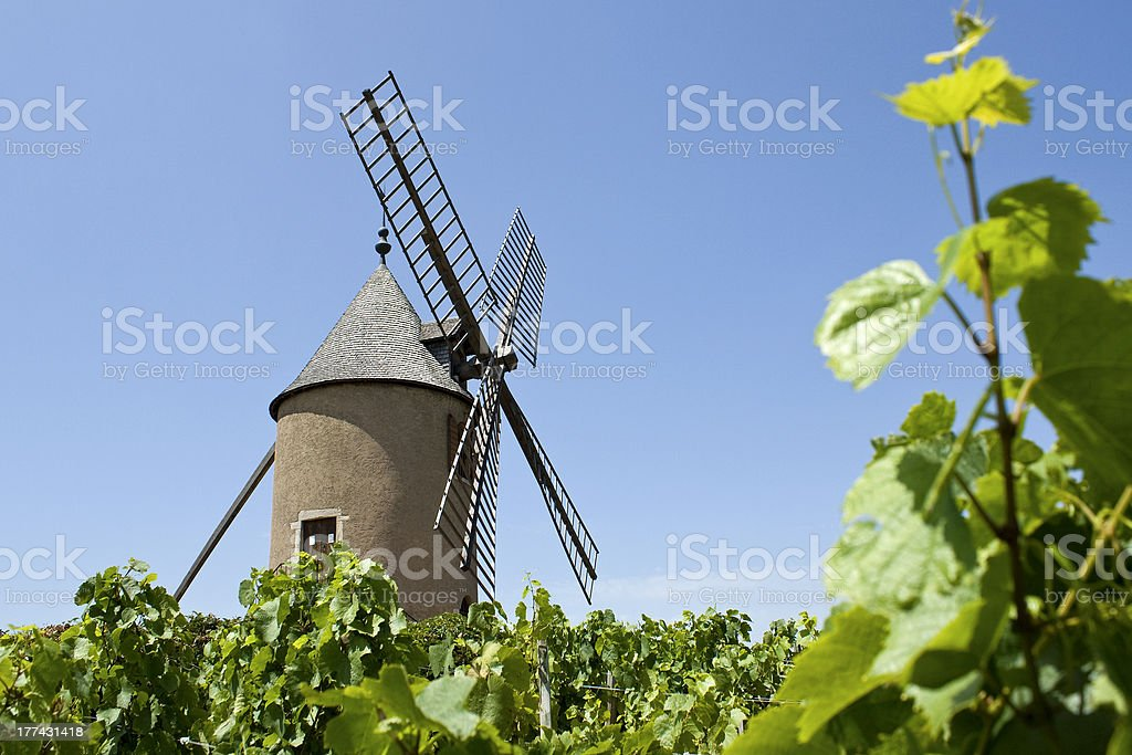 Old windmill in vineyard. Beaujolais. France. stock photo