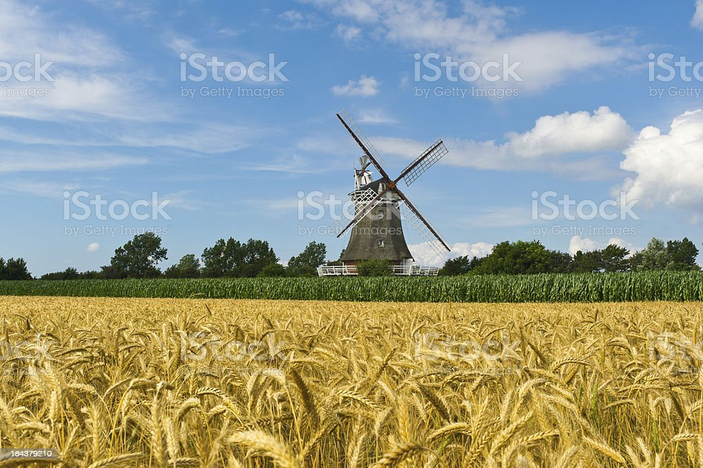 old Windmill on Island Foehr and wheat field wide DOF stock photo