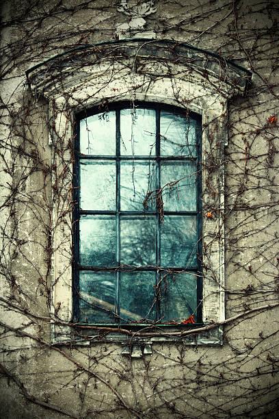 antiga janela e videira - ivy building imagens e fotografias de stock