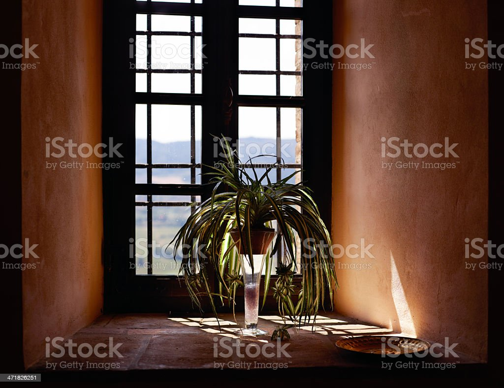 Old Window with plant. Color Image royalty-free stock photo