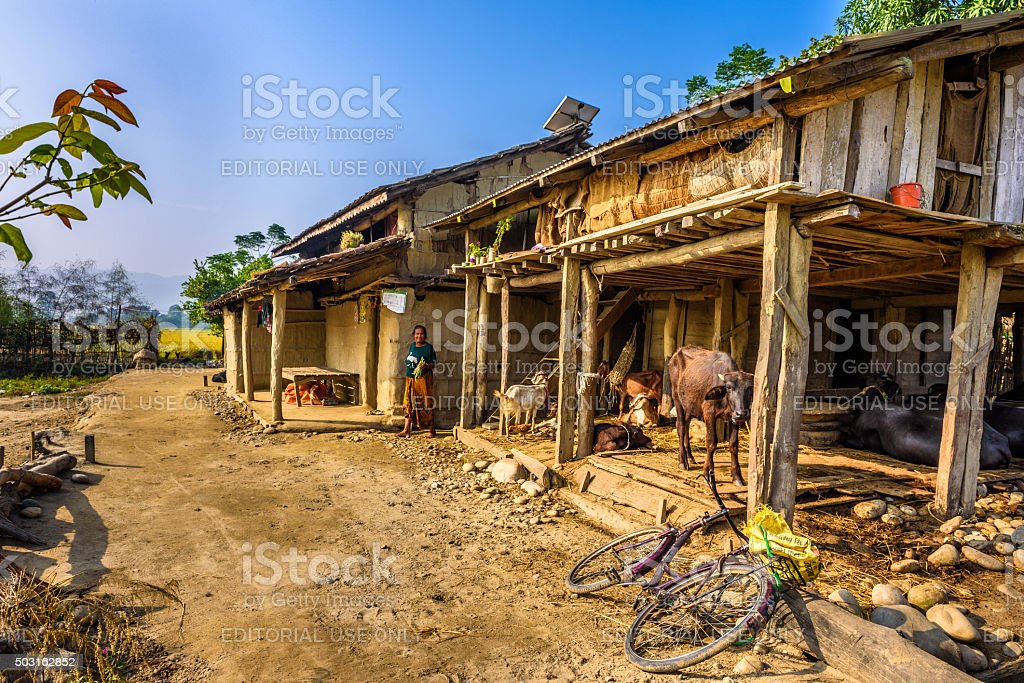 Old woman and her livestock on a farm in Nepal stock photo