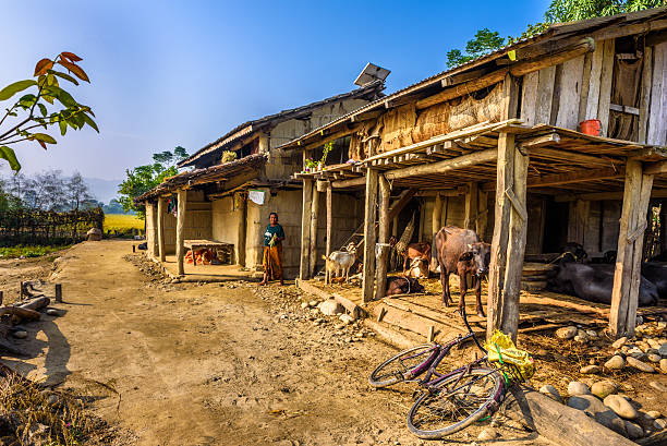 alte frau und ihr vieh, der auf einer farm in nepal - ziegenhof stock-fotos und bilder
