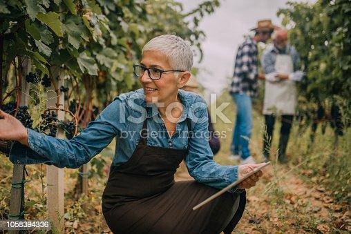 1063236916 istock photo Old woman using digital tablet at vineyard 1058394336