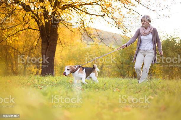 Old woman walking her dog outside picture id460495467?b=1&k=6&m=460495467&s=612x612&h=uhwv0clfl1fszelmksg sw7ftgw5pawl3kwuknqrpae=
