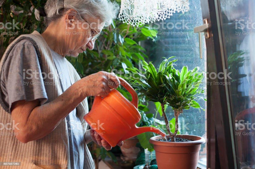Alte Frau gießen Blumen – Foto