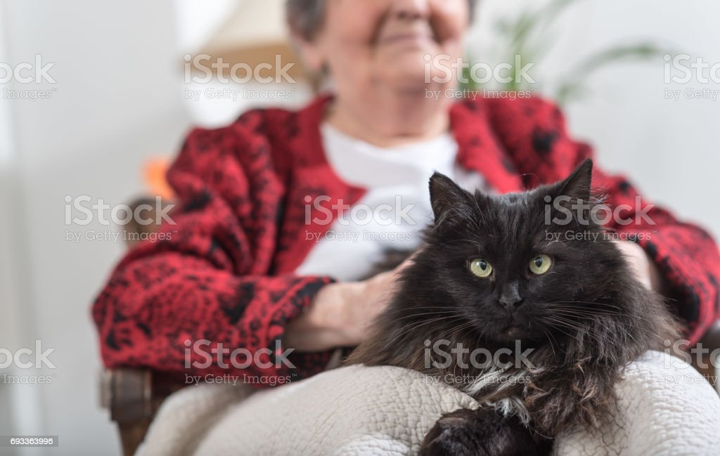 Old woman with her cat stock photo
