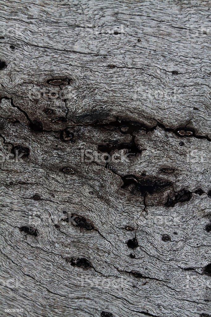 Old wood background royaltyfri bildbanksbilder