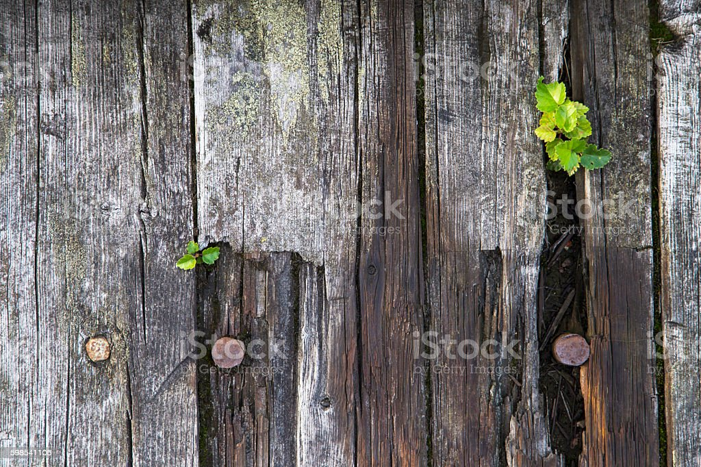 Old wood board in macro photo libre de droits
