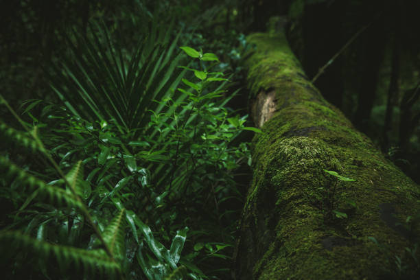 Old wood covered with green moss stock photo
