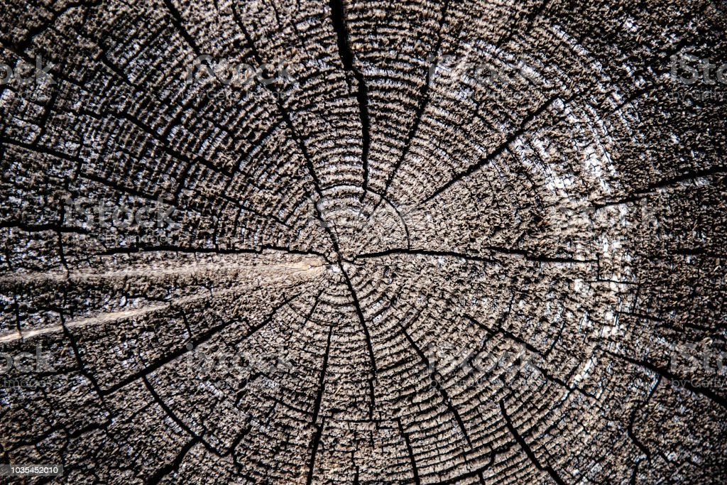 Old Wood Cracked Rings stock photo