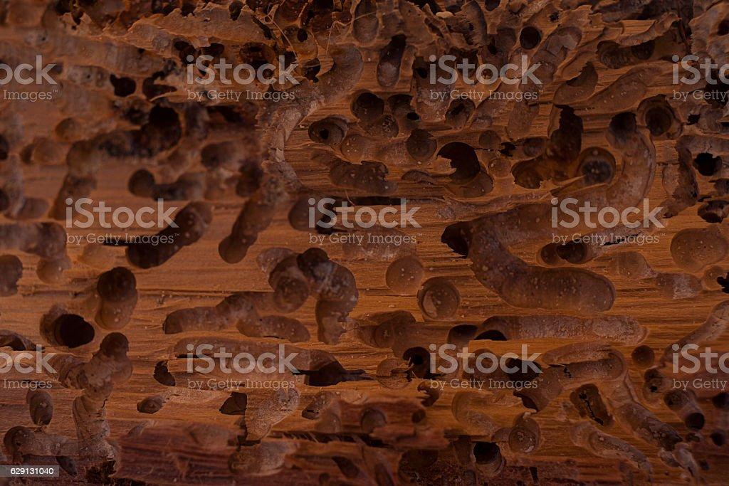Old wood eaten by bark beetle stock photo
