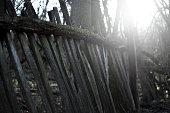 istock old wood fence 944566894