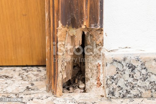 Old wooden door frame affected by woodworm. Wood-eating larvae of species of beetle