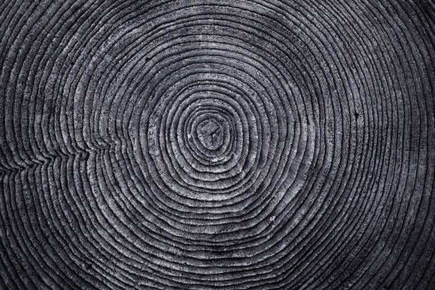 Old Wood ring texture stock photo