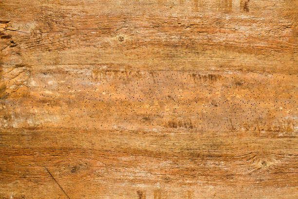 Old wood texture. Abstract background. stock photo