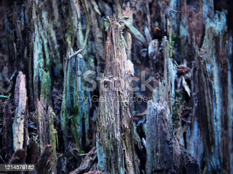 465559373 istock photo old wood Texture Background Pattern. 1214576182