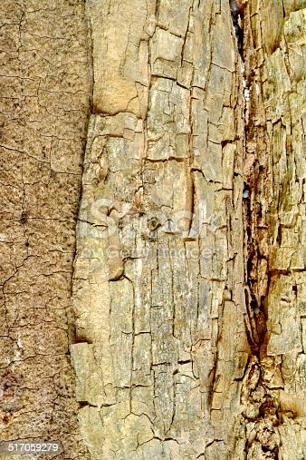 istock old wood texture with splits 517059279