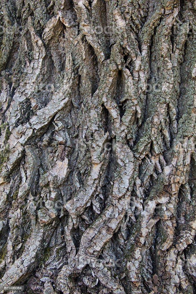 Vieux bois de fond de Texture photo libre de droits