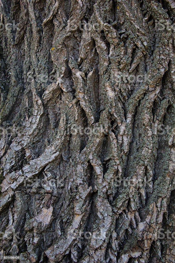 Trama di sfondo di legno vecchio albero foto stock royalty-free