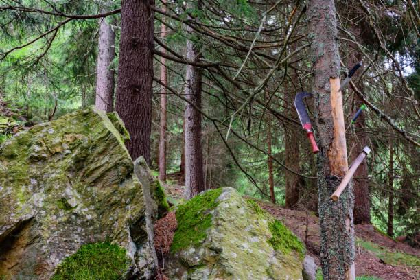 alte hölzerne Werkzeuge im Wald – Foto