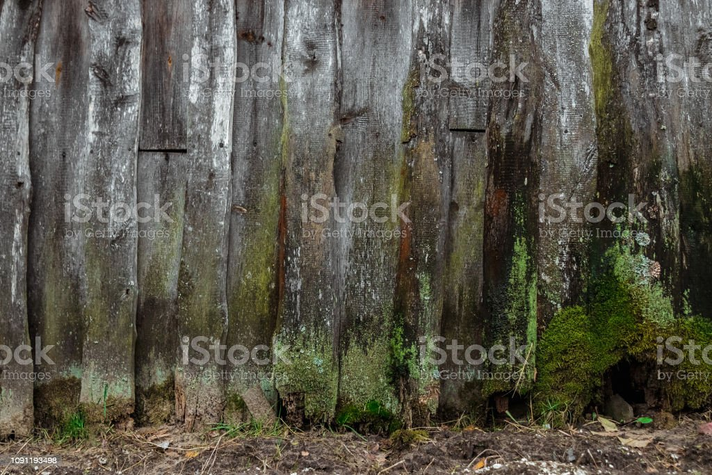 Old, wooden background, old boards covered with moss, mold, rot. The...