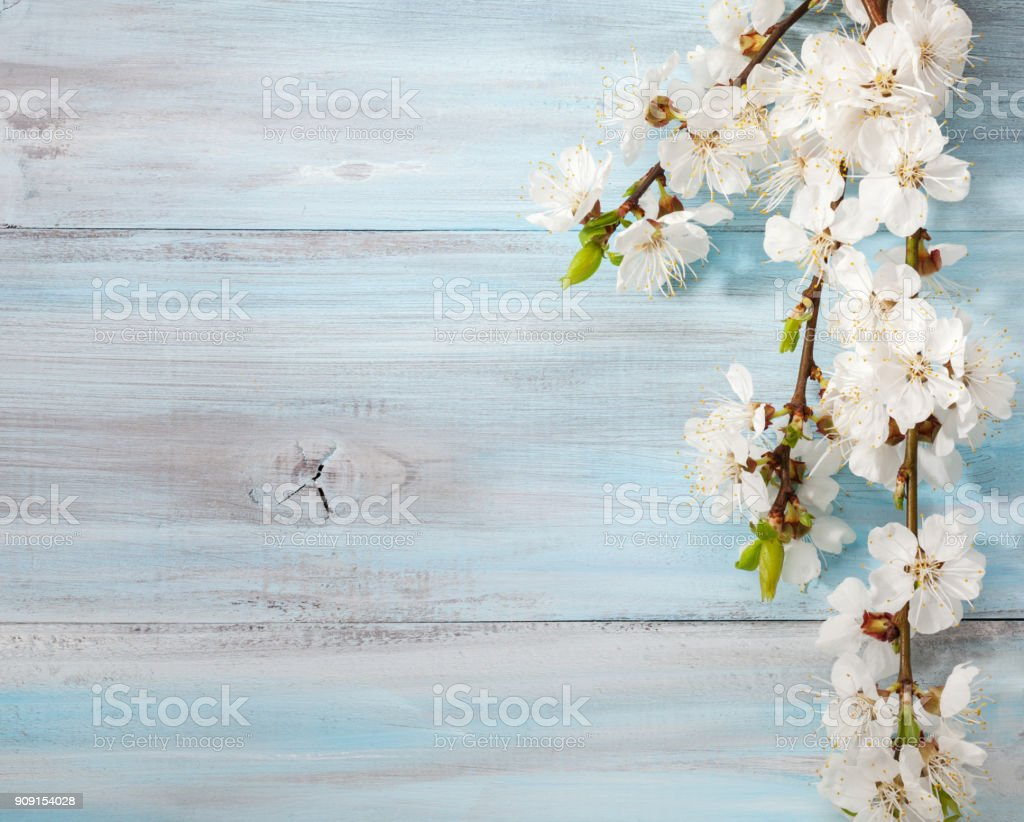 Old wooden background with branches of blossoming apricot. stock photo