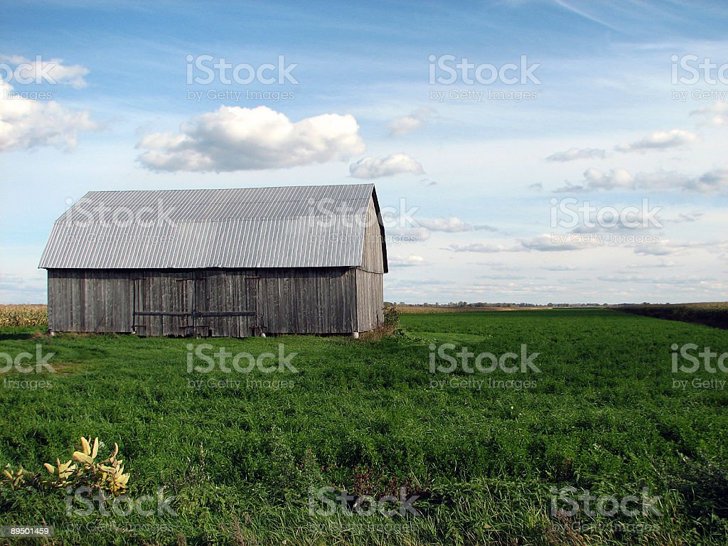 Old wooden barn in the green field royalty-free stock photo