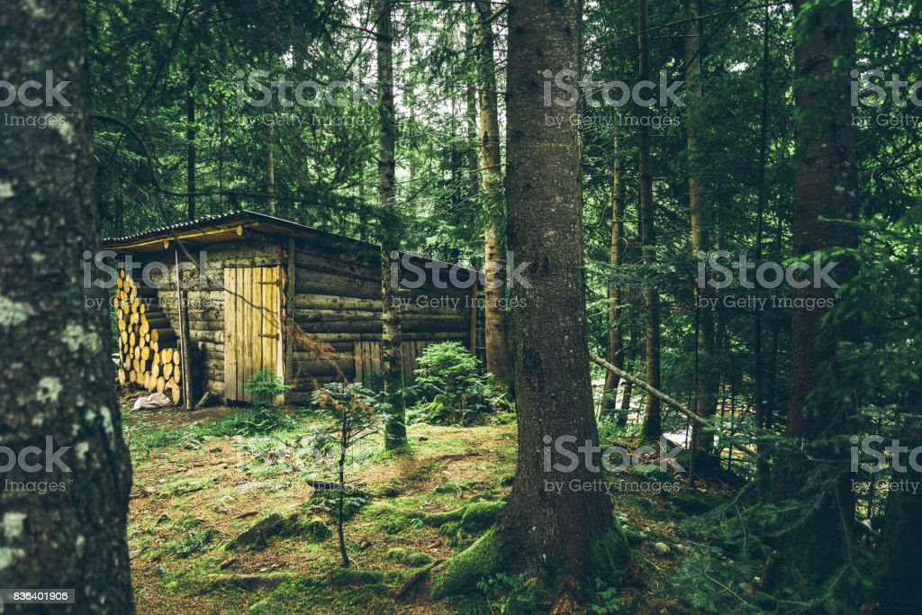 old wooden barn in the middle of the forest stock photo