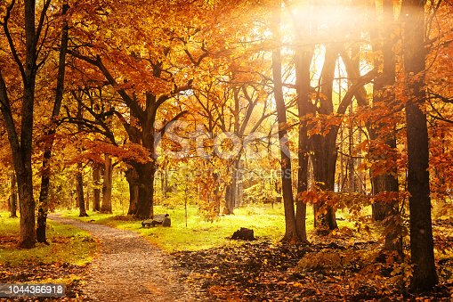 istock Old wooden bench in the autumn park 1044366918
