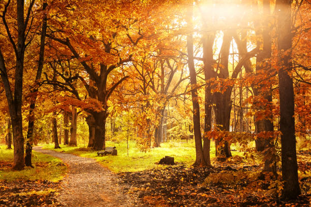 old wooden bench in the autumn park - falling stock pictures, royalty-free photos & images