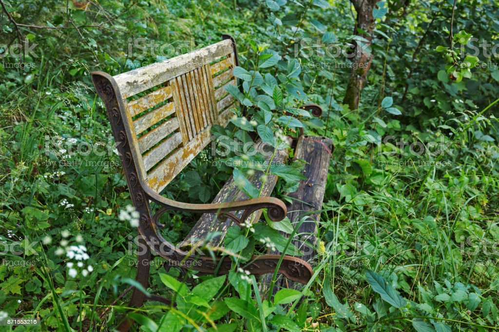 Old wooden bench in the forest stock photo