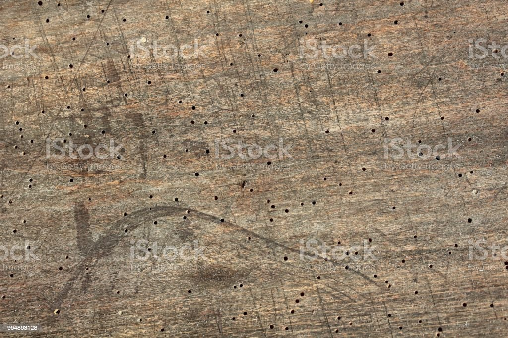 old wooden board with traces of bark beetles royalty-free stock photo