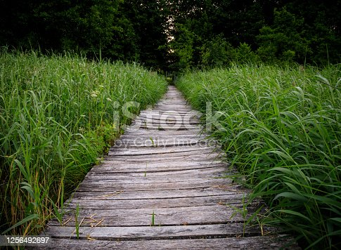 An old wooden pier on a lake with sweet flag on both sides. Dark calm scenery, at dawn.
