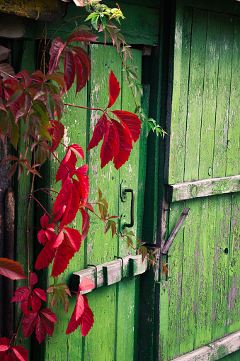 Old Wooden Door Stock Photo - Download Image Now