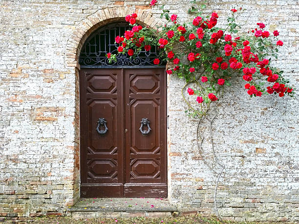 Old wooden door with red blooming roses stock photo