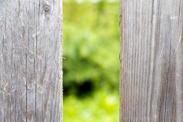 Old wooden fence grey color. Old wooden fence grey color. Through the large cracks visible greens. anachronistic stock pictures, royalty-free photos & images