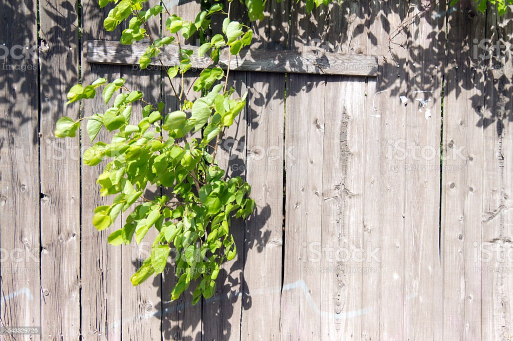 Old wooden fence grey color. Through a hole in the stock photo