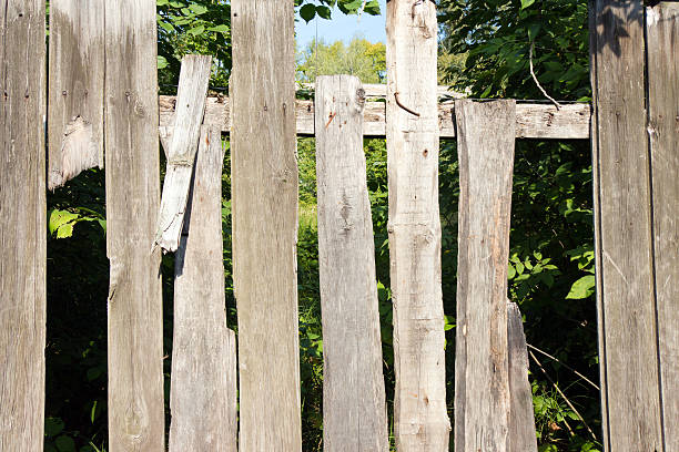 Old wooden fence grey color. Through the large cracks visible Old wooden fence grey color. Through the large cracks visible greens. The foliage behind the fence in the shade. anachronistic stock pictures, royalty-free photos & images