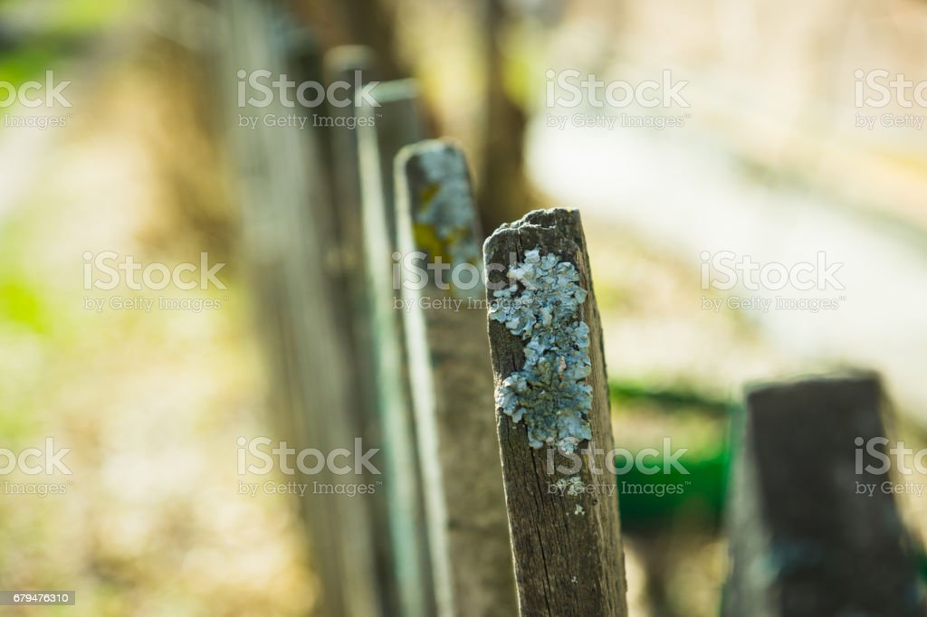Old wooden fence 免版稅 stock photo