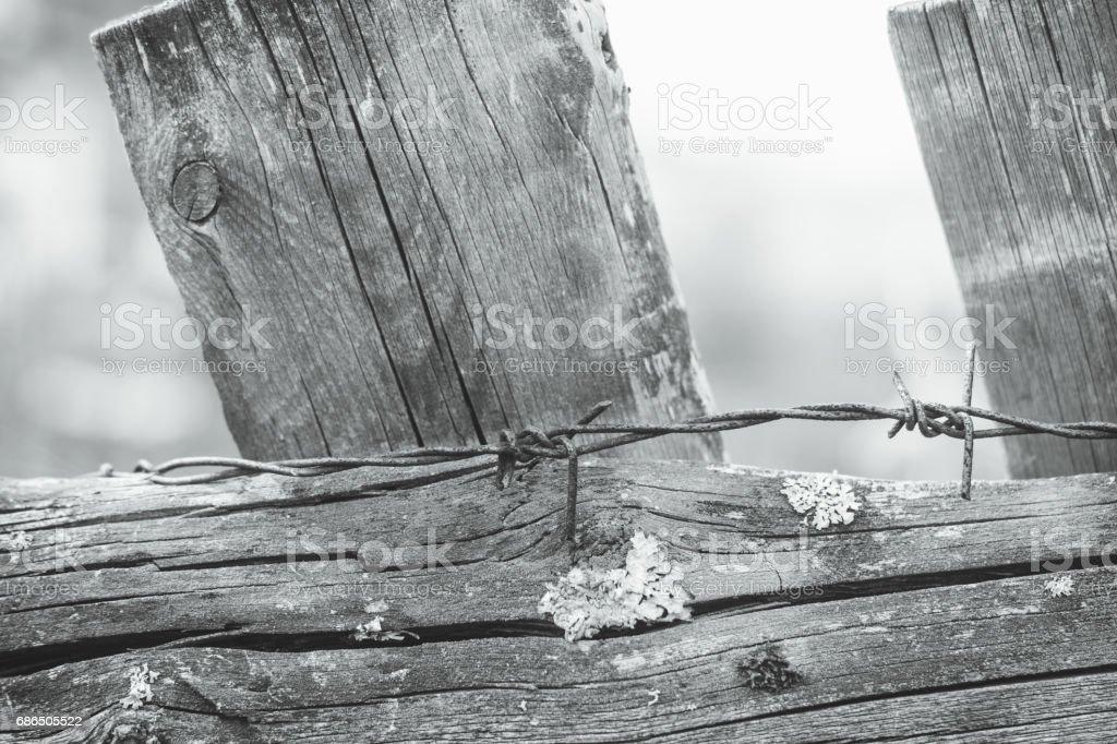 Old wooden fence wit moss zbiór zdjęć royalty-free