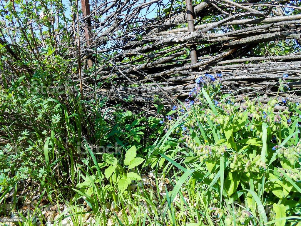 Vieille clôture en bois, avec une wicketis entre les arbres photo libre de droits